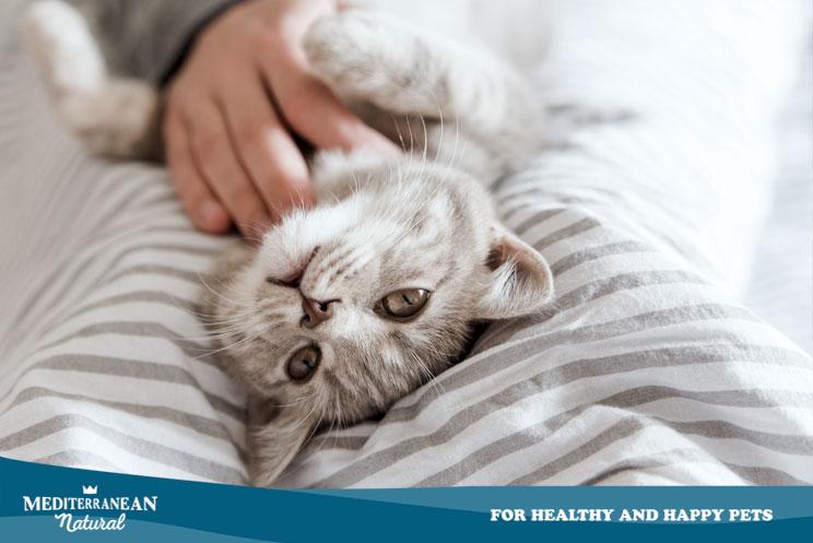 Gatos diabéticos: síntomas, tipos y tratamiento