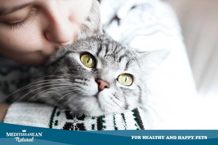 9 formas de saber que tu gato te quiere