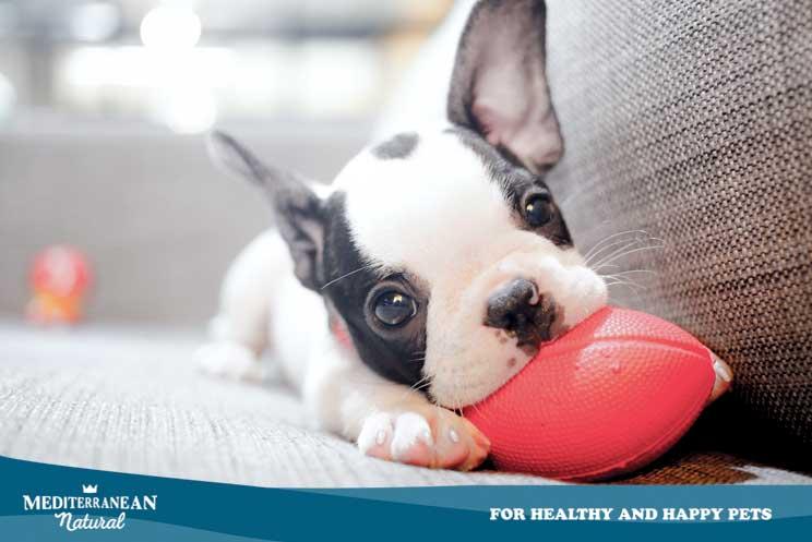 Consejos para la educación del perro en su etapa de cachorro