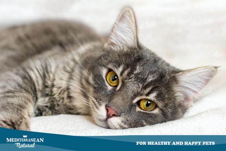 6 señales que indican estrés en un gato