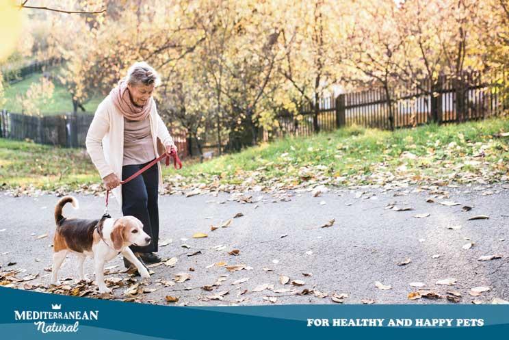 ¿Cómo saber si mi perro tiene demencia? ¿Cuál es su tratamiento?