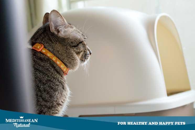 Cómo elegir el arenero perfecto para mi gato