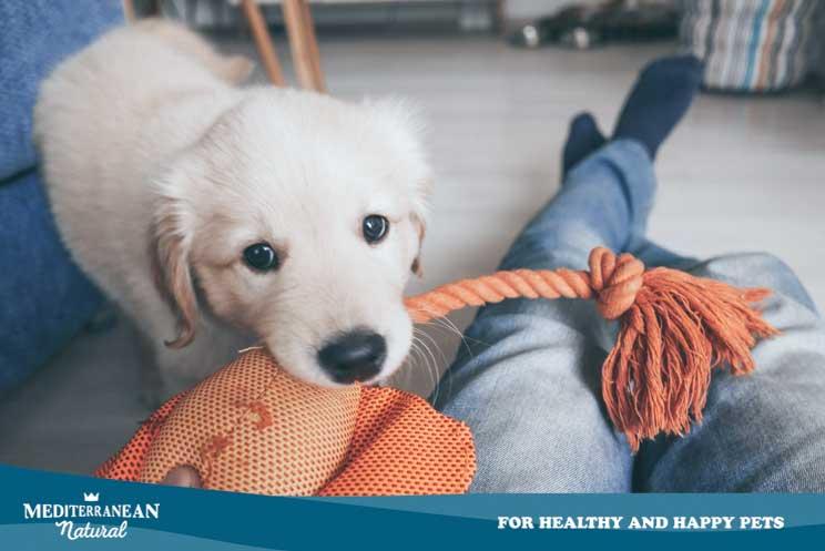 ¿Cuándo y cómo debe un cachorro comenzar a socializar?