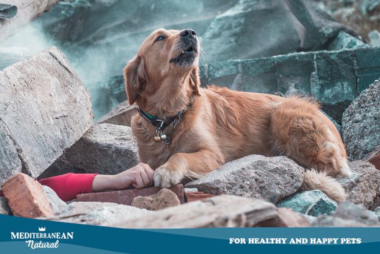 ¿Cómo se entrena y cómo trabaja un perro de rastreo?