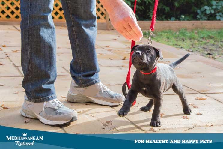 Lenguaje perruno: Cómo entender a nuestro cachorro y que él nos entienda