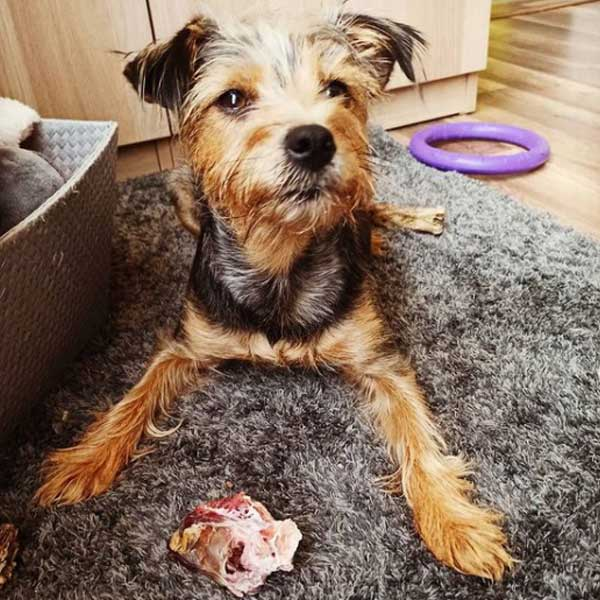 Majka lucky dog brocheta jamon serrano mediterranean natural para perros