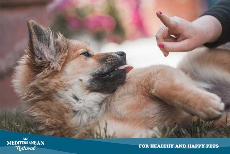 Por qué debes poner límites a tu perro y qué ocurre si no lo haces