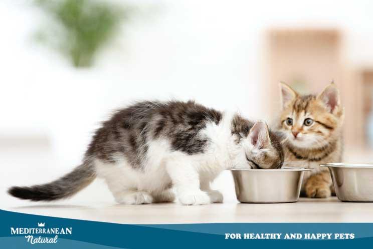 ¿Cuántas veces debe comer mi gato al día y qué cantidad?