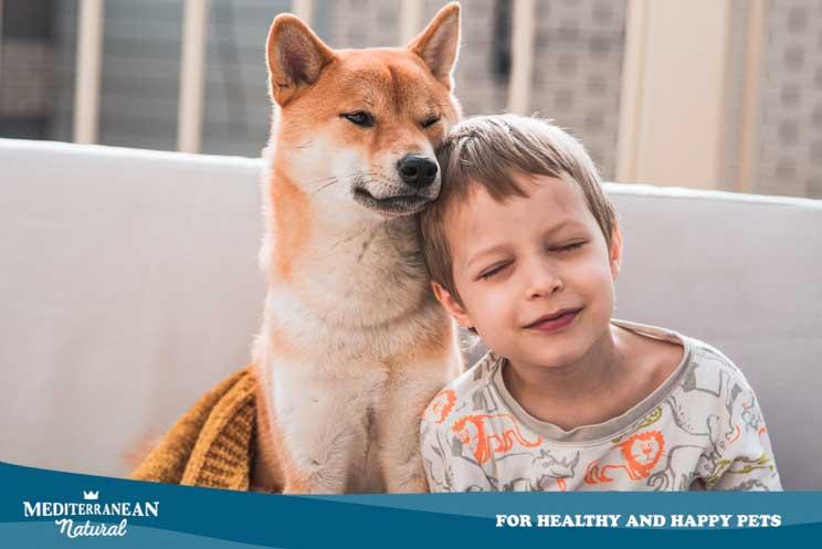 Beneficios de la relación entre niños y perros