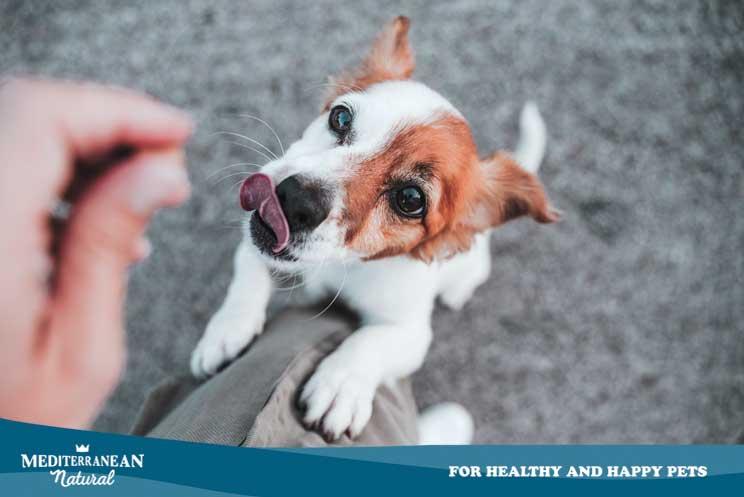 Cómo influye la alimentación en la educación de un perro
