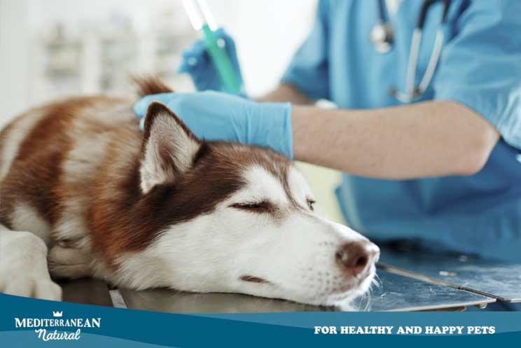 Ozonoterapia en perros: qué es, cómo se aplica y cuáles son sus beneficios