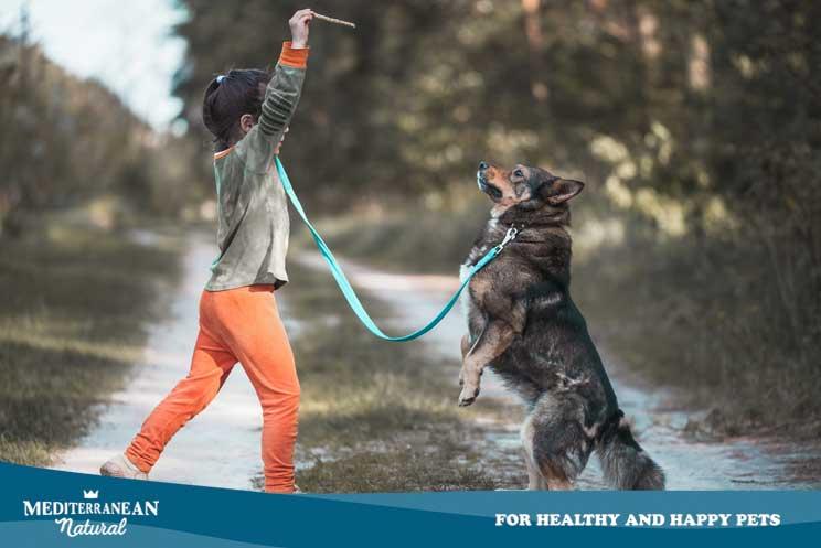 Cómo los niños pueden ayudar en la convivencia y educación de un perro