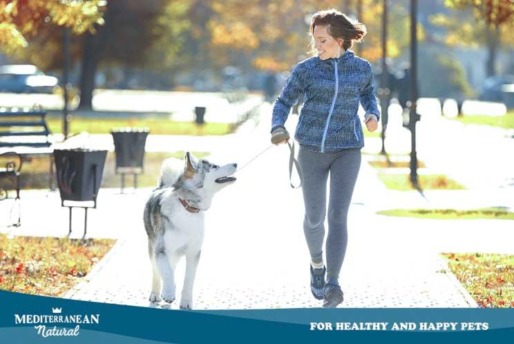 Saca a tu perro a pasear. Aunque tengas jardín o vivas en el campo