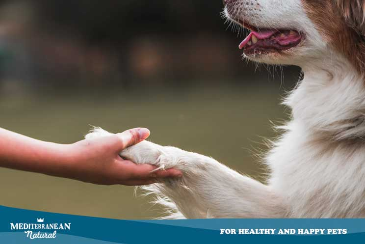 5 trucos fáciles que los niños pueden enseñar a su perro